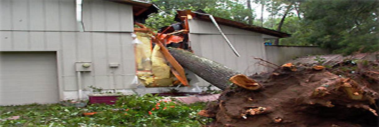 Tree fallen on house